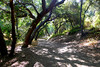 Walnut Creek Hike - Michael D. Antonovich Trail