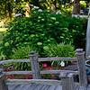 Celeste's garden coming to life.