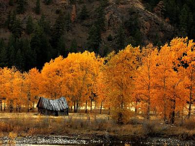 Barn & Autumn Leaves