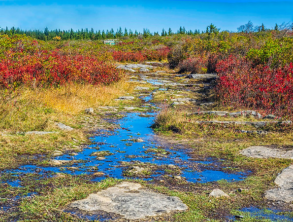 Dolly Sods Fall No. 1