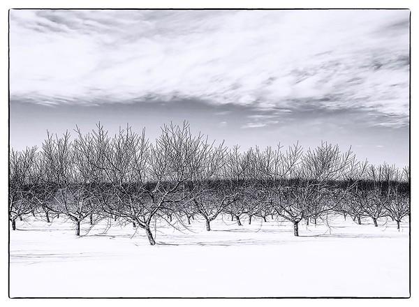 Winter Orchard No. 1