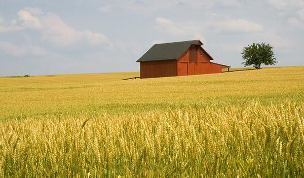 Golden Harvest<br /> Charles Town, West Virginia