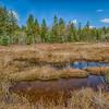Marsh at Blackwater