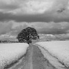 Lone Tree in Inwood