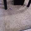 Bugs everywhere!