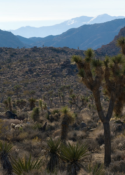 Mojave Desert in December!<br /> <br /> <br /> Joshua Tree NP, CA