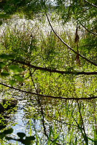 wetlands2_14
