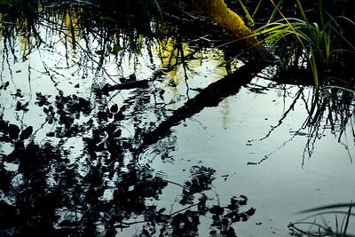 wetlands2_02
