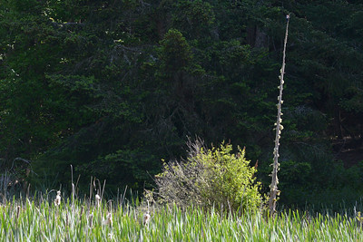 wetlands2_19