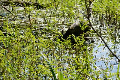 wetlands2_16