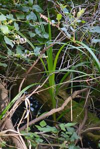 wetlands2_15