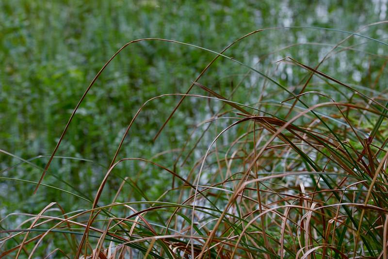 wetlands2_20