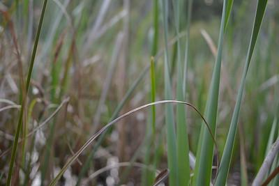 wetlands2_22
