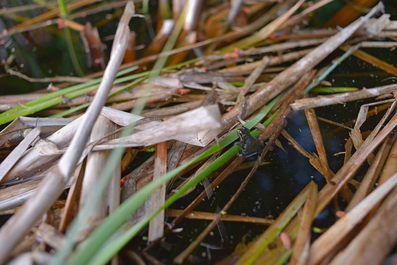 wetlands2_21