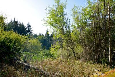 wetlands2_12
