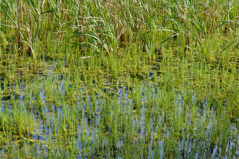 wetlands2_18