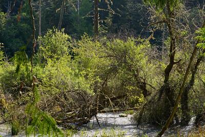 wetlands2_17