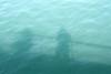 Water shadow self-portrait.