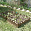 I put in a raised bed vegetable garden this year.  Here is is in the first week.
