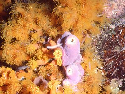 Cupcoral & Pink sponge_03