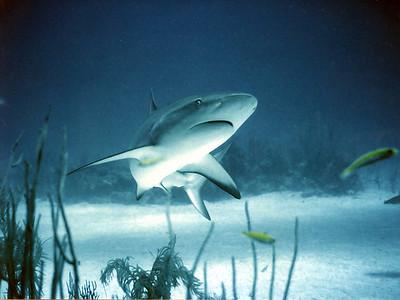Sharkwatch_04