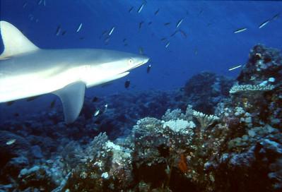 Sharkwatch_02