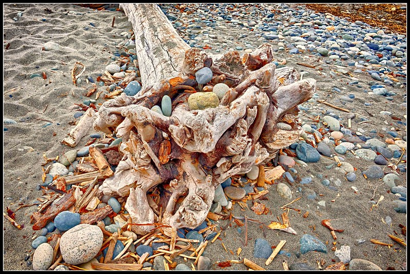 Driftwood and Rocks, Deception Pass State Park