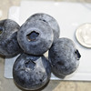 mutant blueberries - about the size of a quarter!