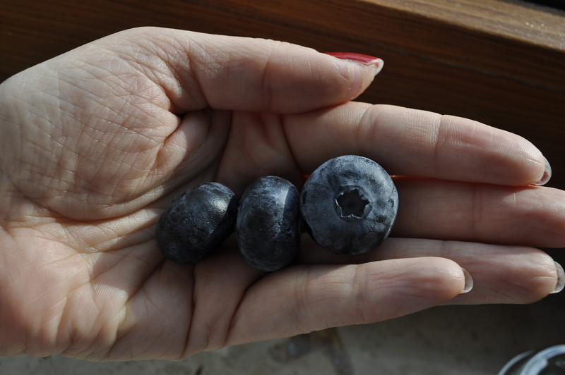 mutant blueberries!