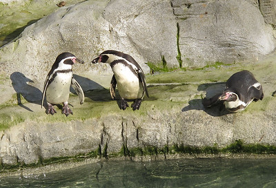 IMG_0464 Flamingo Land 24-10-2011 SM