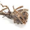Lumpy Brown Weevil Plays Dead