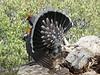 Blue Grouse near Half Dome trail