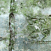 Old carving on a beech tree waaaaaaayyyy back in the woods (Redlands)