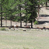The 5 wild horses at Upper Lee Meadows.