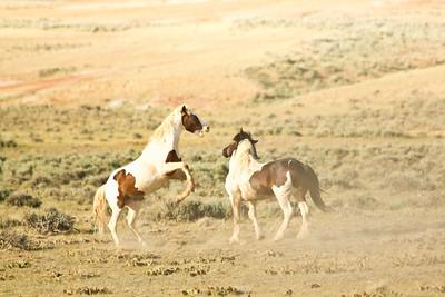 Wild Mustangs 2
