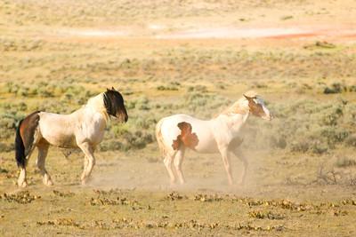 Wild Mustangs 3