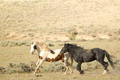 Wild Mustangs 4
