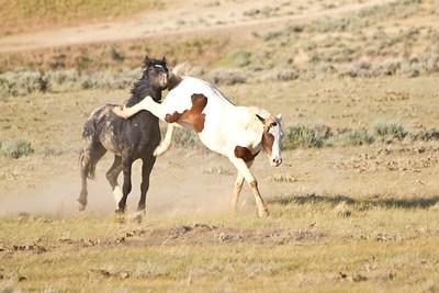 Wild Mustangs 6