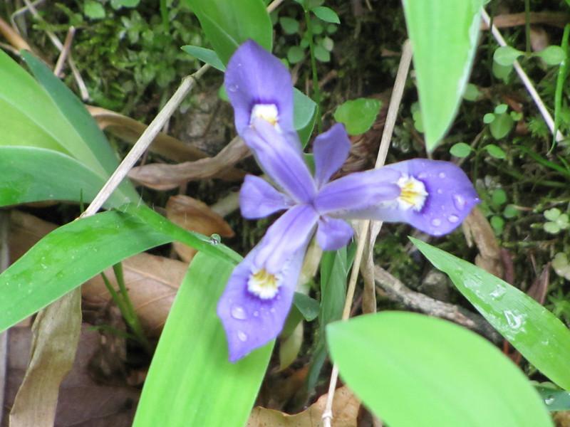 Spring2011 001