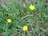 Spring2011 018