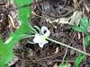 Spring2011 027