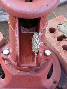 frogpump1