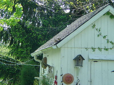 2 Doves On Shed