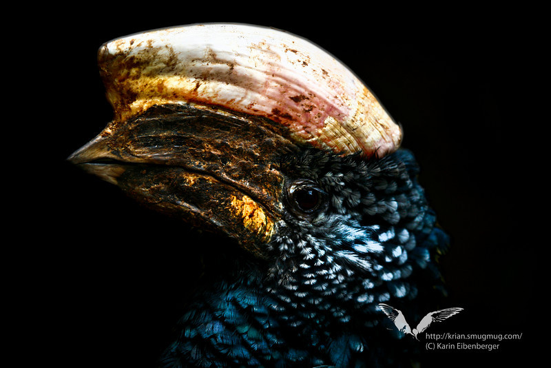 A very bold hornbill, he was actually stalking me.