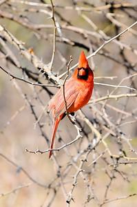 0812_Birds_015