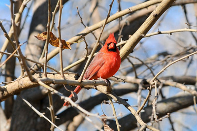 0812_Birds_025