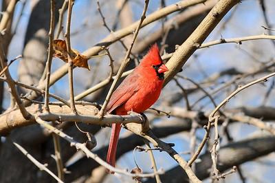 0812_Birds_023