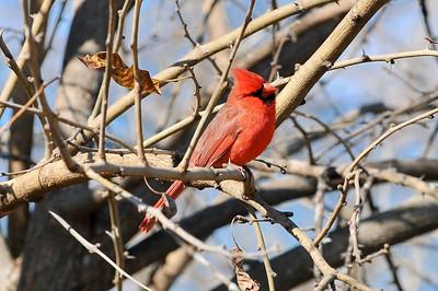 0812_Birds_029
