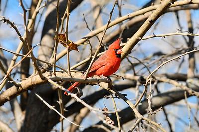 0812_Birds_021