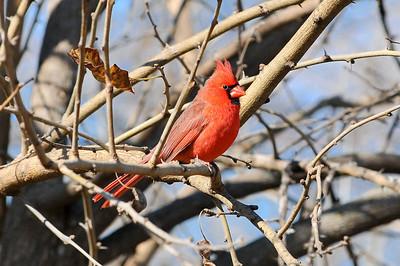 0812_Birds_026